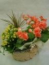 花鉢&観葉植物 Ver 2
