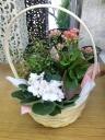 鉢花&観葉(取手が動くラクラク手入れ)