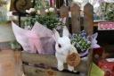お花の中から「こんにちは」 ~ラッビット~ピンク