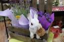 お花の中から「こんにちは」 ~ラッビット~パープル