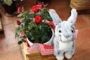 ウサギのナンシー withレッドローズ