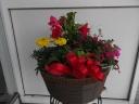 母の日寄せ鉢