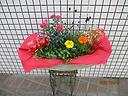 母の日「寄せ鉢」