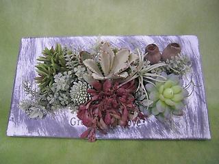 多肉植物のフレーム