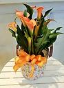 プレミアムカラー鉢 花色オレンジ