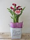 花鉢~カラー~