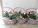花鉢~ミニバラ・アソートセット~