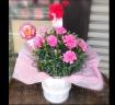♪母の日スペシャル♪カーネーション鉢