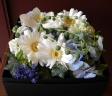 BOX flower(ホワイト&ブルー)