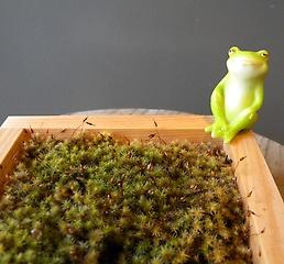 ヒノキ枡の苔庭(かえる)
