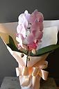 可愛いピンクの胡蝶蘭