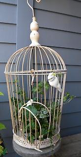 小鳥の巣A