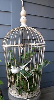 小鳥の巣B