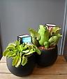 食虫植物set