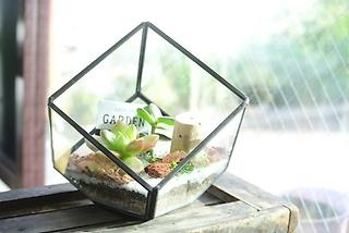 多肉植物テラリウム小 おまかせ商品
