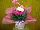母の日の定番!ピンクのカーネーションバスケット