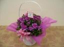 お花がかわいい☆ピンクのミニペラルゴニウム