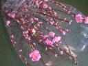 桃の花だけ花束