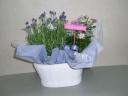 ラベンダ-とミニバラの寄せ鉢