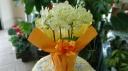 胡蝶蘭鉢花