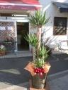観葉植物 ドラセナユッカ(青年の樹)10号鉢