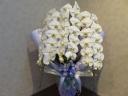 白の三本立ち胡蝶蘭
