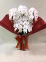 胡蝶蘭の鉢 白5本立