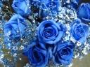 青いバラがほしい!!と言われたら、ハイ、これ!!