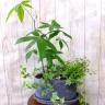 パキラ観葉寄せ植えオーバルセラミックストーン鉢