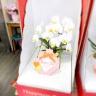 ミニ胡蝶蘭ホワイト2F