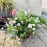 ガーデンカーネーションとネモフィラリース寄せ植え