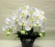 ファレノプシス Whiteの造花