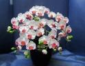 胡蝶蘭 リップホワイト