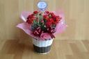 母の日カーネーション花鉢5寸 赤