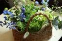 Plant life plus