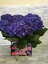 紫陽花(HBAカーリースパークル)ブルー