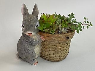 多肉植物寄せ植え ウサギ