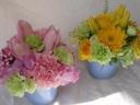 ◇~Spring Pink&Yellow~◇