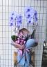 魅惑の紫色胡蝶蘭 パープルエレガンス 2本立