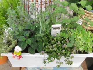 jardinet ージャルディネー