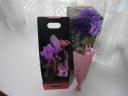 ムーンダスト花束とマイクロ胡蝶蘭の母の日ギフト