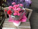 ピンクのカーネーションの花鉢 プードルピック付