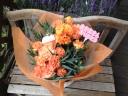オレンジのカーネーションの花鉢 プードルピック付
