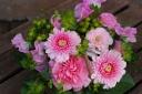 野の花屋 ピンクのバスケットアレンジメント
