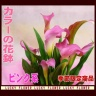 ピンクカラーの花鉢
