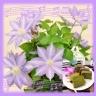クレマチス(テッセン)の花鉢とお茶のカステラセット