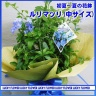 ルリマツリの花鉢