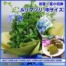 ルリマツリ&お茶のスイーツセット