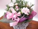 カーネーションの花鉢 ピンク