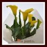 punto.幸せの黄色い「カラーのお花」